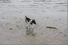 Hund in der Nordsee